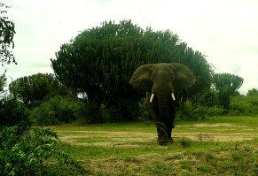 elephantey
