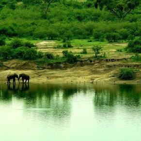 elephantswater