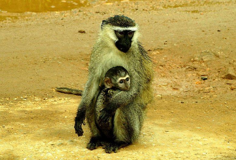 monkeyandbaby